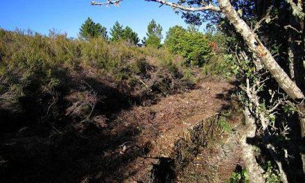 """La Sociedad Zoológica califica de """"atropello ambiental"""" los desbroces realizados en La Cervigona de Acebo"""
