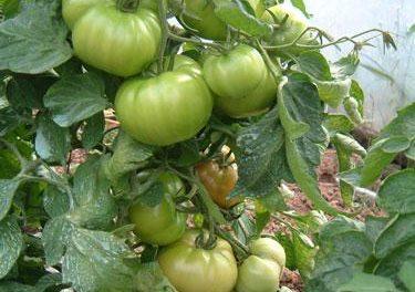 La Junta fomentará la agricultura ecológica incentivando los agrupaciones de productores