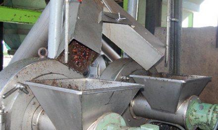 La cooperativa La Milagrosa de Monterrubio recolectará 6,5 millones de kilos de aceitunas esta campaña