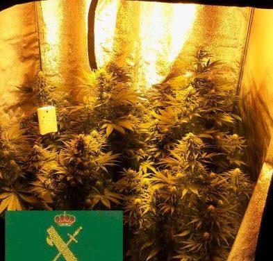 La Guardia Civil consigue aprehender más de un kilogramo de marihuana en Navas del Madroño