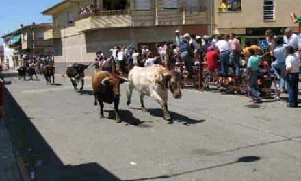 El encierro de Pérez Villena el más largo de las fiestas de Moraleja hasta el momento