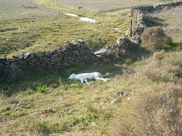 Fepaex pide colaboración para encontrar el autor de la castración de un perro que le produjo la muerte