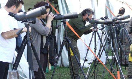 SEO/BirdLife se consolida como un referente en turismo ornitológico durante el certamen FIO 2011