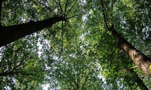 Fundación Félix Rodríguez de la Fuente evidencia los esfuerzos de Extremadura con los árboles singulares