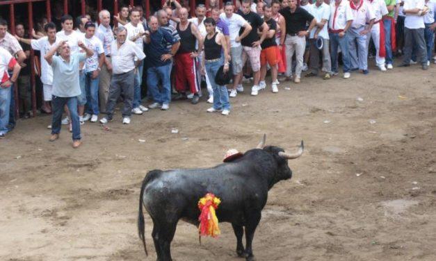 La peña El 27 de Coria elige un toro de Pérez Escudero, procedencia Santa Coloma, para las fiestas de San Juan