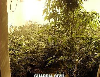 La Guardia Civil desmantela una red de tráfico de drogas en el Campo Arañuelo y detiene a tres personas