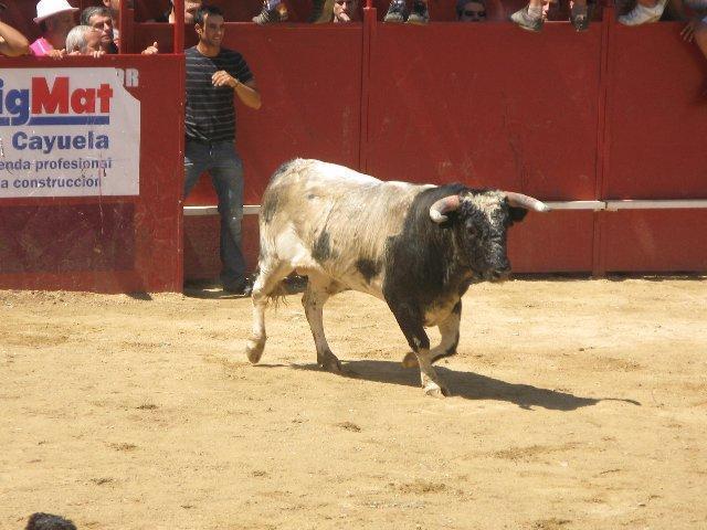 El Ayuntamiento de Moraleja dará a conocer hoy el nombre del organizador de los festejos taurinos