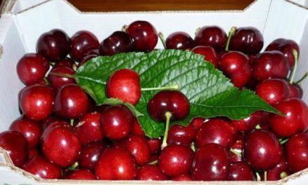 La Junta y la Delegación del Gobierno iniciarán una campaña para evitar la venta fraudulenta de cerezas
