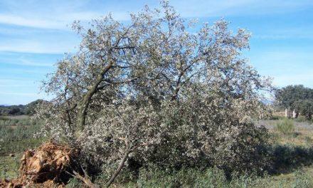 Andares se opone al recinto ferial de Montehermoso y advierte sobre los daños que ocasionará a las aves