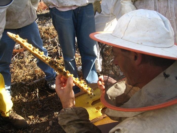 El sector apícola del norte de Cáceres recolecta un 50% menos de polen debido a la climatología y el calor