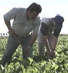 El 60% de los parados que hay en Extremadura, unas 38.000 personas, lleva más de un año sin trabajo