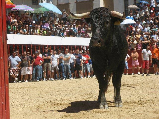 El Ayuntamiento de Moraleja abrirá la comisión de fiestas de San Buenaventura a la participación de las peñas