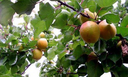 Las organizaciones agrarias lamentan que las ayudas de la UE por la crisis del pepino no repercutan en la fruta