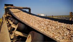 Una segunda planta de biomasa podría instalarse en Moraleja y produciría astillas y combustibles forestales