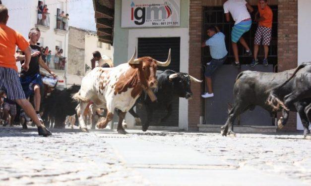 Los novillos de Pla San Martín y Urcola protagonizan un encierro rápido y veloz con un minuto y 43 segundos
