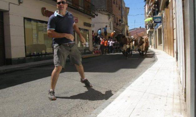 Los novillos de El Madroñal y los mansos se unen en una manada compacta en un tiempo de dos minutos
