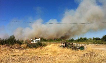 Un incendio de origen desconocido calcina nueve hectáreas en el término de La Moheda de Gata