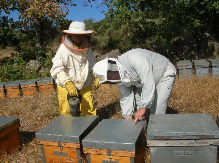 La Asociación Cacereña de Apicultores limará asperezas con Agricultura para crear las Agrupaciones Sanitarias