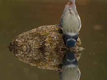 Adicomt organiza en agosto dos cursos de iniciación a la fotografía de naturaleza en Miajadas y Trujillo