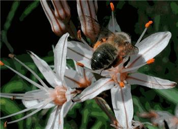 La consejería de Agricultura simplifica los trámites para la solicitud de las ayudas al sector de la apicultura