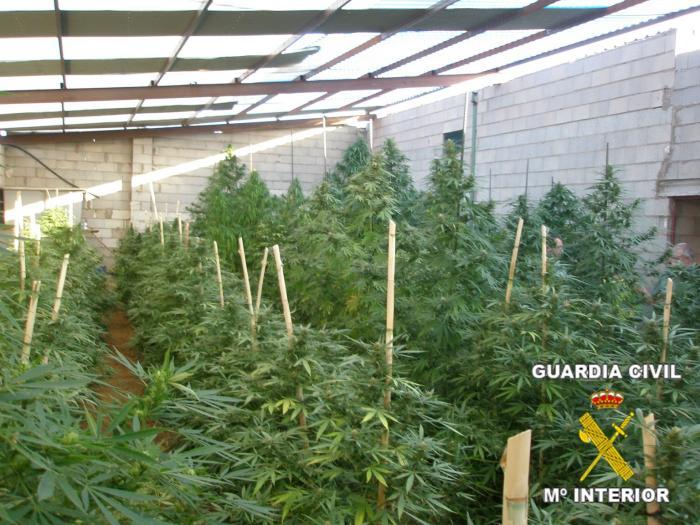 La Guardia Civil detiene a 17 personas en la provincia de Badajoz por cultivo y tráfico de marihuana