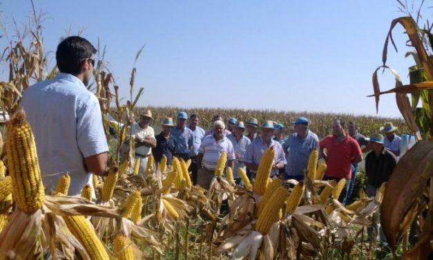 Agricultores cacereños conocen las nuevas variedades de maíz de Dekal para la campaña 2012