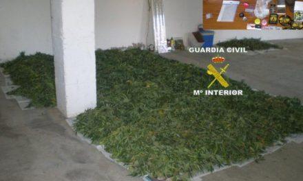 La Guardia Civil desmantela un punto de cultivo y venta de marihuana en Montehermoso