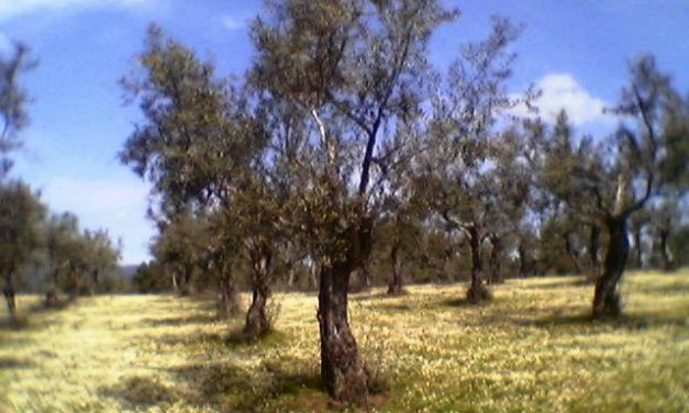 Bruselas da luz verde a las ayudas para el almacenamiento privado del aceite de oliva