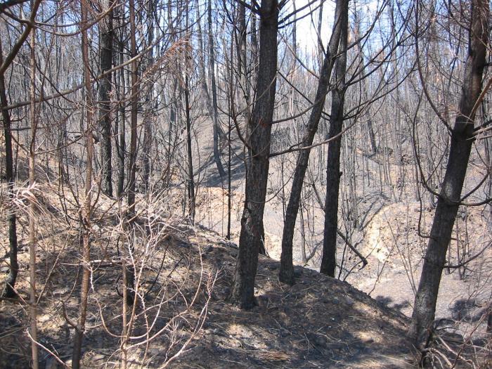 Los responsables del Plan Infoex declaran controlado el incendio de Hervás que se originó el pasado viernes