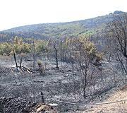 El incendio de Hervás ha afectado finalmente a 375,26 hectáreas tanto de Hervás, como de Jerte y Cabezuela