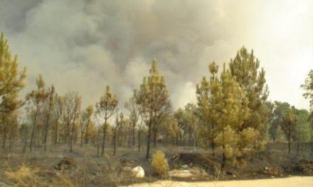 """El incendio forestal de Valverde del Fresno que se inició en la madrugada está """"estabilizado"""" y bajo control"""