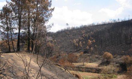 Medio Ambiente revisará el grado de ejecución de los planes provinciales de prevención de incendios