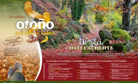 El Valle del Ambroz ya celebra su primer Otoño Mágico como Fiesta de Interés Turístico Regional