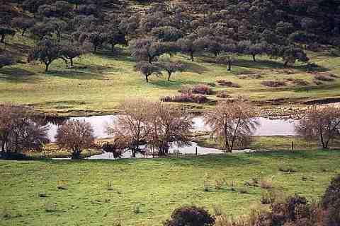 Dos colectivos conservacionistas piden el mayor nivel de protección para el río Almonte