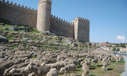 Más de 900 cabezas de ganado participarán en la Feria Agroganadera de Trujillo que comienza el jueves