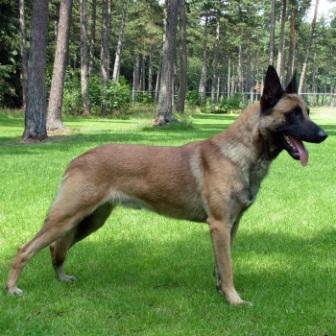 GPEX adquirió tres perros por valor de 12.800 euros sin que hubiera encargo previo por parte de la Junta