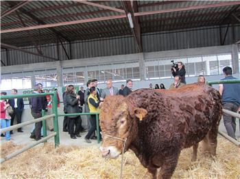 El Gobierno regional anuncia en Trujillo que se adelantará el pago de las ayudas a los productores de vaca nodriza