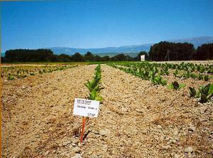 Agricultura aclara que el anterior gobierno no tramitó las ayudas agroambientales del tabaco de 2010