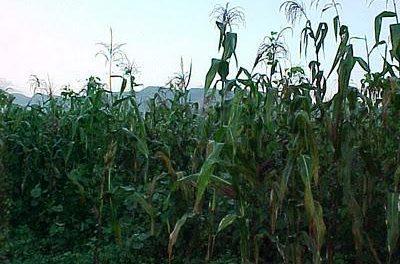Los agricultores extremeños percibirán la totalidad del pago de las ayudas de la PAC el próximo diciembre