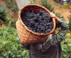 """Apag tilda de """"traición"""" el decreto de inversiones para los viticultores aprobado por el Gobierno de Zapatero"""
