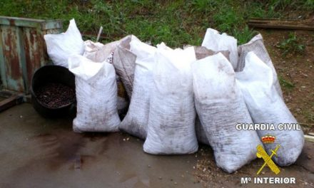 La Guardia Civil sorprende a dos personas con 400 kilos de aceitunas sustraídas en la zona de Almendralejo