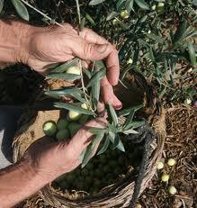 """La iniciativa """"Vive Rural"""" ofrece al turista participar en las campañas agrícolas de Hurdes y Sierra de Gata"""