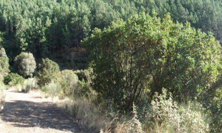 Encuentran el cadáver de un ciudadano rumano con varias puñaladas en un pinar de Valverde del Fresno