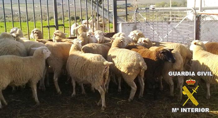 La Guardia Civil detiene a seis personas acusadas de robar animales en fincas de Extremadura