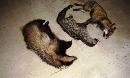 Ecologistas en Acción denuncia el atropello de especies en peligro de extinción en la Ex-205