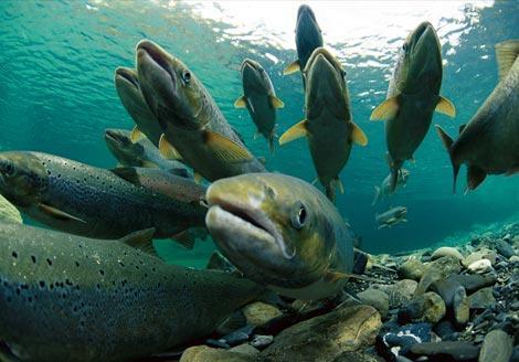 El Ejecutivo regional desarrollará actuaciones en el centro de reproducción de salmónidos de Jerte