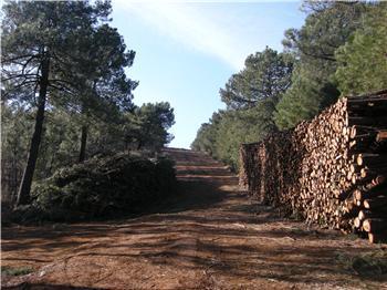 La Dirección General de Medio Ambiente estudia potenciar la biomasa forestal en los montes públicos