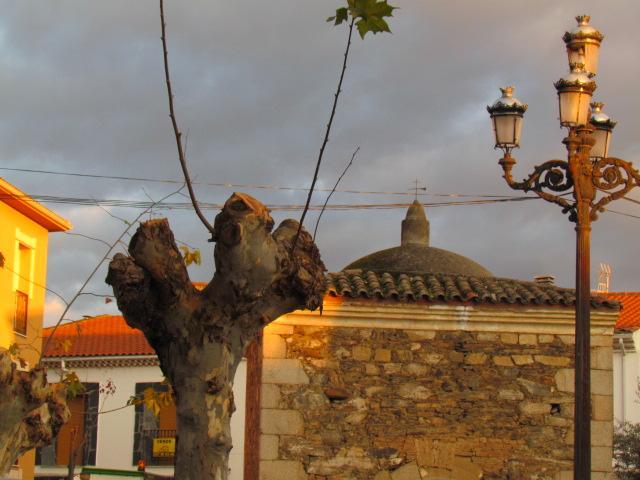 """Vettonia denuncia las podas """"irracionales"""" en los árboles de Moraleja y exige que se paren estos trabajos"""