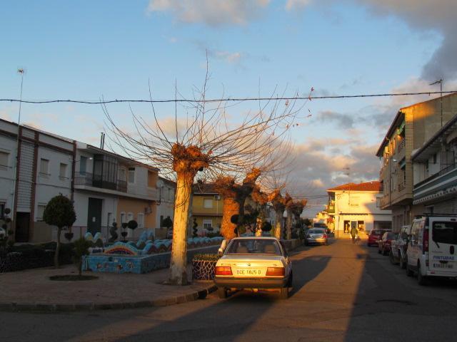 El Ayuntamiento de Moraleja y Vettonia colaborarán para planificar las podas y los trabajos de jardinería