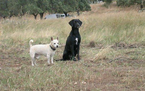 El Ayuntamiento de Moraleja inicia una campaña de sensibilización dirigida a propietarios de perros